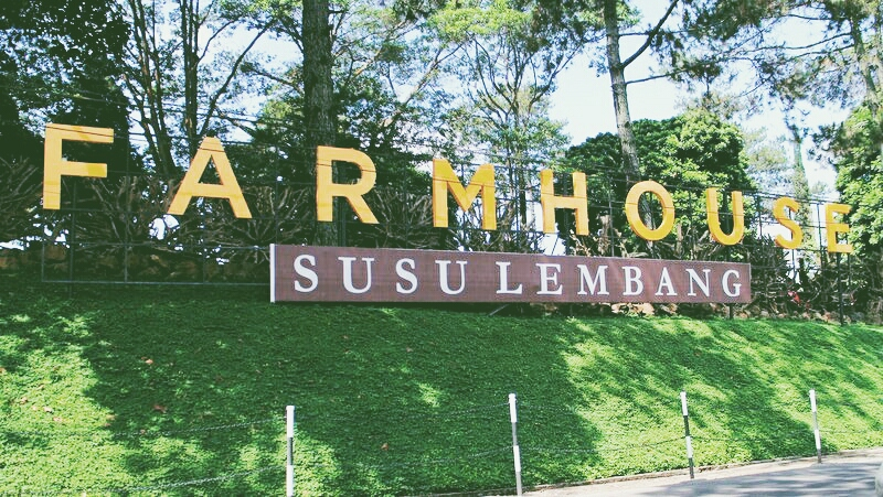 مزرعة سوسو ليمبانغ باندونق في باندونج اندونيسيا