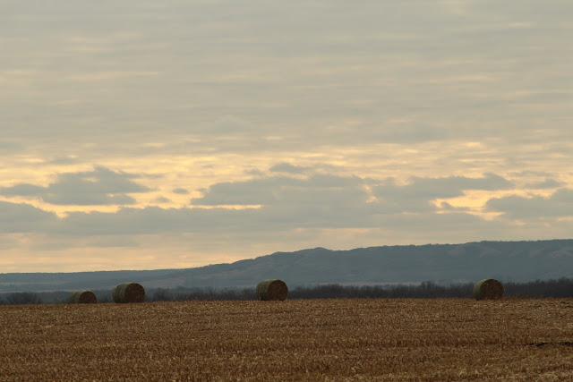 Bales on a ridge