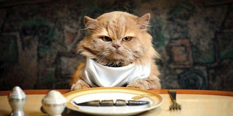 Αυτές είναι οι πιο επικίνδυνες τροφές για τις γάτες;