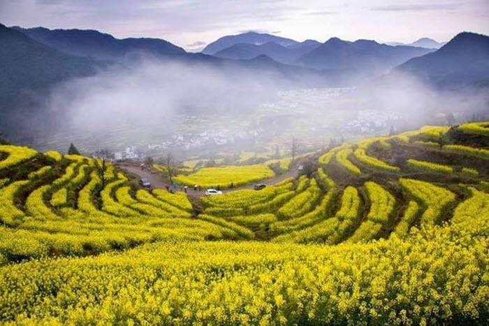 Mê đắm mùa hoa cải rực rỡ sắc vàng trên những cánh đồng ở Trung Quốc