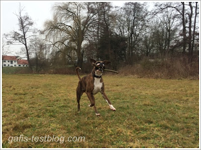 Boxer Amy hat Spaß in der Wiese
