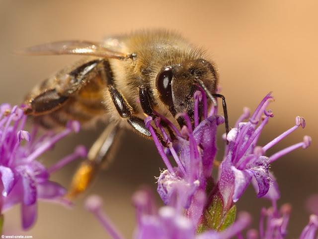 Πωλείται μέλι στην Ίο