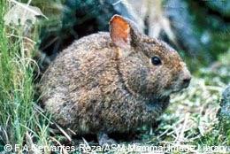 Romerolagus Diazi: The Volcano Rabbit