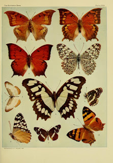 The butterfly book free download