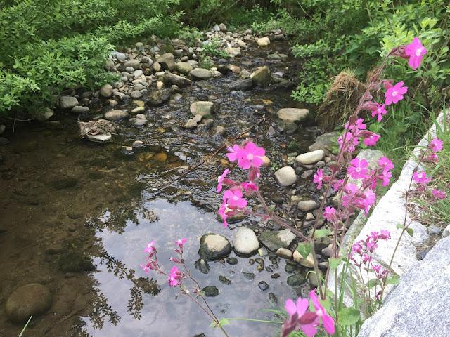 Bach und lila blühende Pflanzen