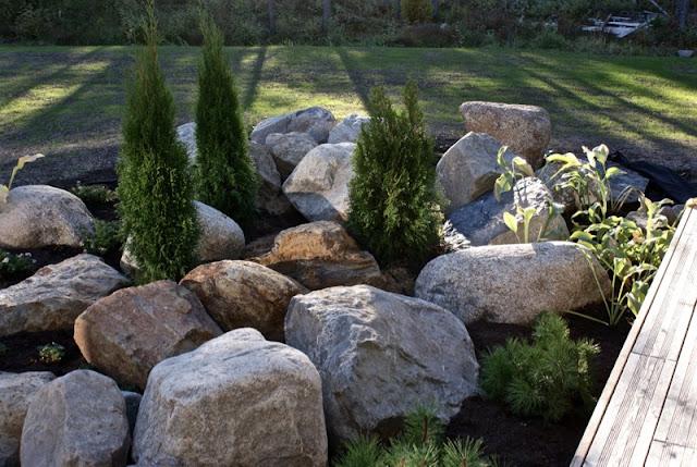 moderni piha, lehtikuusi, tuija, kääpiövuorimänty, japaninsara, kuunlilja, kivikko, puutarha, calluna, grönlanninhanhikki