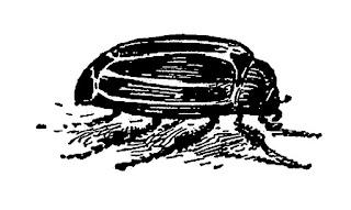https://3.bp.blogspot.com/-f-juf-dbyeE/V4vgH7IaBvI/AAAAAAAAco0/MSDKsezPZRYi6ESVER5kaU_Hkaw2Xd2iQCLcB/s320/bug-beetle-insect-clipart.jpg