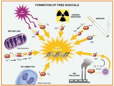 Punca radikal bebas yang merosakkan DNA