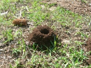 Karınca Yuvalarına Yön Bulma