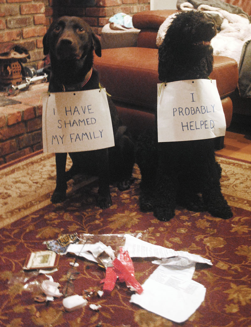 Sharing Funny dog shaming (30 pics) Love ~ I Love Funny ...