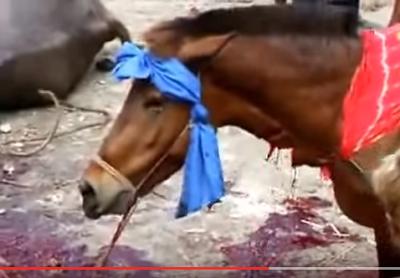 Φρίκη: Ανθρώπινα ζόμπι σφάζουν όρθιο το άλογο και ζητωκραυγάζουν