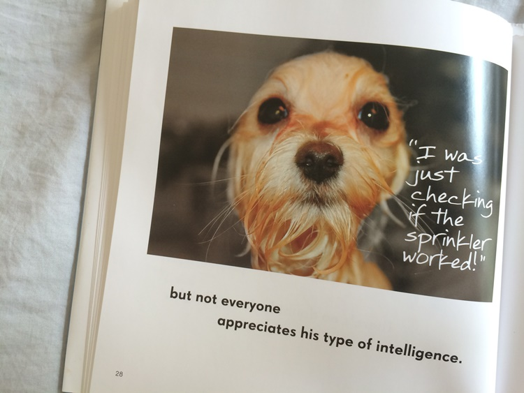 """All Dogs have ADHD"" - not everyone appreciates his type of intelligence"
