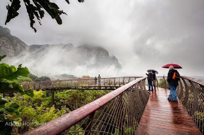 """El puente colgante más bonito del mundo en """"Kirstenbosch¨"""
