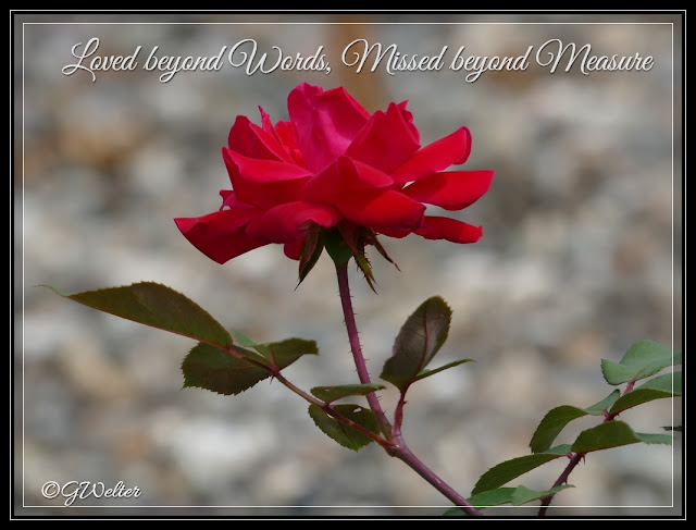 http://www.lifeasiseeitphotography.net/2015/08/loved-beyond-words-missed-beyond.html