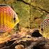 Đôi nét về cá đĩa