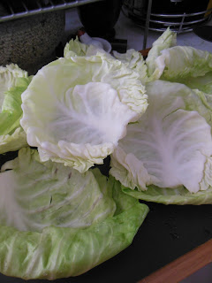 Cooled cabbage leaves, ready for the ground beef filing for Stovetop Cabbage Rolls.
