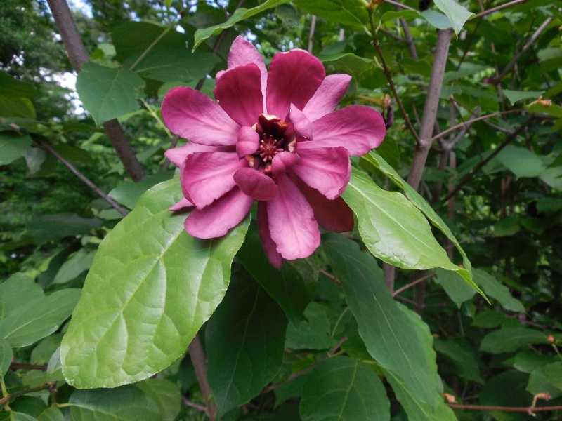 Jehuite jard n bot nico de atlanta todav a un poco m s for Caracteristicas de un jardin botanico