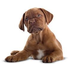 How to Naturally Treat Diarrhea in Dogs