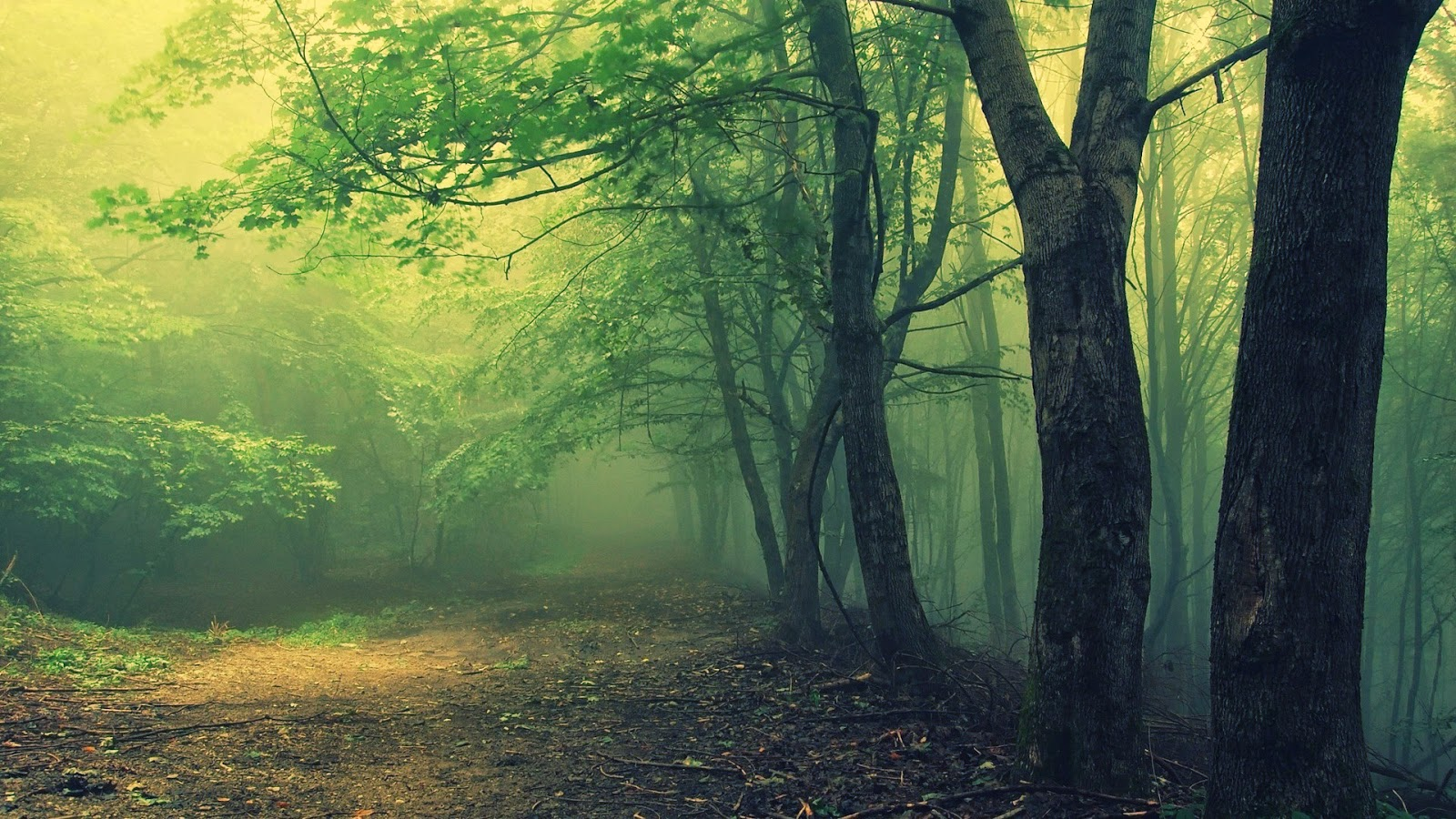 Haunted Romanian Forest 10 Worlds Amazing Forests