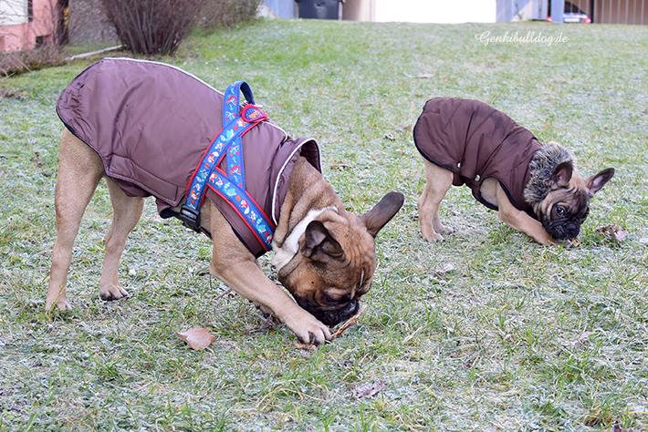Wolters Wintermantel für Französische Bulldoggen
