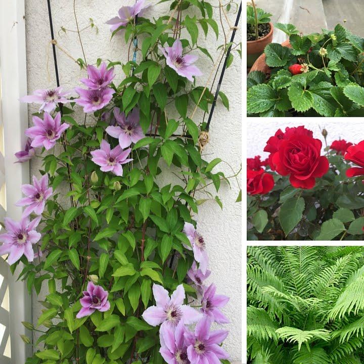What I'm Growing - 2016 Garden Update // WWW.THEJOYBLOG.NET