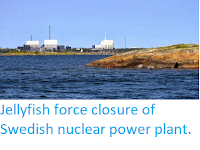 http://sciencythoughts.blogspot.co.uk/2013/10/jellyfish-force-closure-of-swedish.html