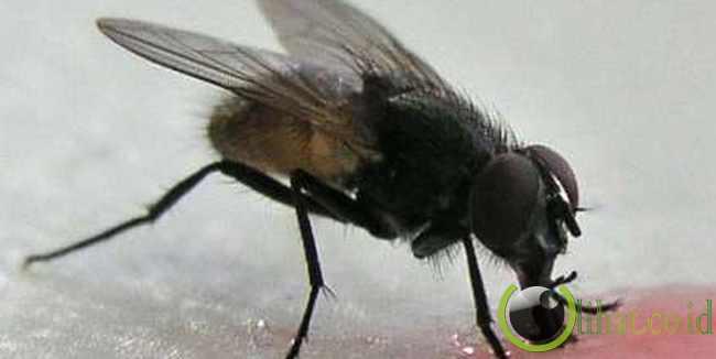 ouseflies and Bees (Lalat dan Lebah)