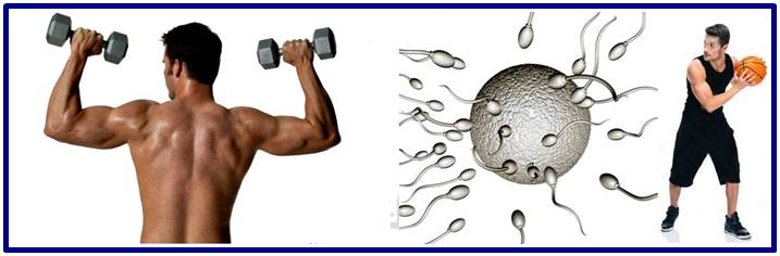Working out improves semen quality