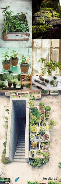 Horta de temperos e medicinais na varanda