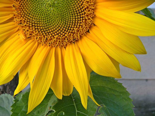 kwiaty, ogród, pomarańczowe, płatki