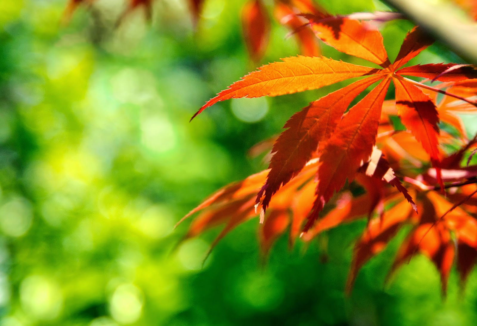 Fall Sunshine Wallpaper 100 Refreshing Leaf Wallpaper Most Beautiful Places In