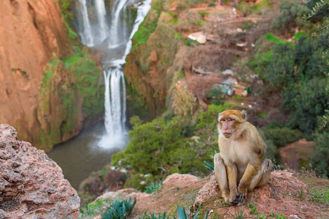 "Searches related to ouzoud, ouzoud falls facts, ouzoud falls swimming, how far is ouzoud waterfalls from marrakech, ouzoud falls map, ouzoud falls entrance fee, ouzoud weather, ouzoud falls monkeys, ouzoud falls tour, desert camping morocco, atlas mountains day trip, day trip to essaouira, marrakech sahara trips, imlil day trip, tallest waterfall in africa, marrakech camel trekking, ourika valley tour, ouzoud falls facts, activities to do in morocco, marrakech to ouzoud waterfalls bus, marrakech day trips reviews, telouet and ait ben haddou, marrakech trip to essaouira, ouzoud waterfalls lonely planet, marrakech star wars, ourika valley half day trip, ouzoud waterfalls tour from marrakech, overnight trip to essaouira, grand taxi marrakech to ouzoud, day hike marrakech, ourika valley camel ride, desert safari marrakech day tours, ouzoud falls atlas mountains, marrakech to ouzoud falls bus, 3 valleys marrakech, atlas mountain waterfall tour, marrakech arabian nights, day trip high atlas mountains, fantasia night marrakech, day trips from marrakech to ourika valley, ouzoud falls on your own, famous waterfalls morocco,""ouzoud falls"" ""ouzoud waterfalls"" ""ouzoud waterfalls morocco"" ""ouzoud morocco"" ""ouzoud falls day trip"" ""ouzoud falls tour"" ""ouzoud falls from marrakech"" ""ouzoud falls facts"" ""ouzoud falls monkeys"" ""ouzoud falls day trip from marrakech"" ""ouzoud azilal morocco"" ""ouzoud azilal"" ""ouzoud accommodation"" ""ouzoud ait atab"" ""ouzoud africa"" ""ouzoud atlas"" ""ouzoud au maroc"" ""ouzoud auberge"" ""ouzoud azilal maroc"" ""ouzoud agadir"" ""hotel a ouzoud"" ""meteo a ouzoud"" ""loyer a ouzoud"" ""hotel à ouzoud maroc"" ""excursion a ouzoud"" ""auberge a ouzoud"" ""restaurant a ouzoud"" ""appartement a ouzoud"" ""voyage a ouzoud"" ""ouzoud barcelona"" ""ouzoud beach camp & restaurant"" ""ouzoud barcelona menu"" ""ouzoud beni mellal"" ""ouzoud booking"" ""ouzoud beni mellal distance"" ""ouzoud beni mellal maroc"" ""ouzoud blog"" ""ouzoud camp"" ""ouzoud cascades waterfalls"" ""ouzoud city"" ""ouzoud cascadas"" ""ouzoud cascate"" ""ouzoud cous cous"" ""ouzoud carte"" ""ouzoud cous cous restaurante"" ""ouzoud death"" ""ouzoud de"" ""ouzoud dormir"" ""d'ouzoud waterfalls"" ""ouzoud falls december"" ""ouzoud falls death"" ""marrakech ouzoud distance"" ""cascades d'ouzoud morocco"" ""cascade d'ouzoud waterfalls"" ""cascade d'ouzoud depuis marrakech"" ""palais d'ouzoud"" ""cascade d'ouzoud marrakech"" ""cascade d'ouzoud maroc"" ""cascade d'ouzoud carte"" ""ouzoud equipement"" ""ouzoud excursion"" ""ouzoud equipement casablanca"" ""ouzoud essaouira"" ""ouzoud essaouira distance"" ""ouzoud el tenedor"" ""ouzoud waterfall excursion"" ""ecole ouzoud casablanca"" ""ecole ouzoud casa"" ""ouzoud falls morocco"" ""ouzoud falls weather"" ""ouzoud google map"" ""ouzoud guide"" ""ouzoud gps"" ""getyourguide ouzoud"" ""gorges ouzoud"" ""gite ouzoud"" ""cascade d'ouzoud google maps"" ""grotte ouzoud"" ""ouzoud green"" ""ouzoud hotels"" ""ouzoud hiking"" ""ouzoud hotel morocco"" ""ouzoud hotel beni mellal"" ""ouzoud hostel"" ""ouzoud hotel france"" ""ouzoud höhe"" ""ouzoud hawaii"" ""ouzoud hébergement"" ""ouzoud hauteur"" ""ouzoud image"" ""ouzoud in winter"" ""ouzoud international oman"" ""ouzoud international"" ""ouzoud itinéraire"" ""ouzoud instagram"" ""ouzoud falls in morocco"" ""ouzoud falls information"" ""ouzoud falls images"" ""ouzoud jus casablanca"" ""ouzoud jean talon"" ""ouzoud waterfalls january"" ""cliff jumping ouzoud"" ""jamal ouzoud"" ""ouzoud kasbah"" ""ouzoud kriokliai"" ""ouzoud krioklys"" ""cascade ouzoud"" ""kasbah ouzoud maroc"" ""kasbah ouzoud contact"" ""kasbah ouzoud hotel"" ""khouribga ouzoud"" ""kasbat ouzoud"" ""klimaat ouzoud"" ""ouzoud localisation"" ""ouzoud location maison"" ""ouzoud location"" ""ouzoud lieu"" ""ouzoud les grottes"" ""ouzoud waterfalls location"" ""lycee ouzoud azilal"" ""logement ouzoud"" ""cascade de l'ouzoud maroc"" ""vallee de l'ouzoud"" ""cascade de l'ouzoud"" ""ouzoud meteo"" ""ouzoud maps"" ""ouzoud monkeys"" ""ouzoud morocco map"" ""ouzoud morocco weather"" ""ouzoud marruecos"" ""ouzoud montreal"" ""ouzoud marrakech distance"" ""ouzoud news"" ""ouzoud falls november"" ""yr.no ouzoud"" ""ouzoud waterfalls northeast of marrakech morocco"" ""meteo ouzoud novembre"" ""aji nsafrou ouzoud"" ""cascade d'ouzoud nuit"" ""ouzoud november"" ""ouzoud nach fes"" ""ouzoud ou ourika"" ""ouzoud ouarzazate"" ""ouzoud or ourika"" ""waterfalls of ouzoud"" ""falls of ouzoud"" ""oued ouzoud"" ""cascadas de ouzoud opiniones"" ""cascadas de ouzoud o essaouira"" ""voyage organisé ouzoud"" ""ouzoud photo"" ""ouzoud pronounce"" ""ouzoud pogoda"" ""ouzoud patisserie"" ""ouzoud paysage"" ""ouzoud plan"" ""ouzoud falls price"" ""ouzoud falls parking"" ""ouzoud waterfalls price"" ""ouzoud waterfalls pictures"" ""ouzoud quad"" ""ouzoud quoi faire"" ""donde queda ouzoud"" ""ouzoud restaurant"" ""ouzoud restaurante"" ""ouzoud restaurant barcelona"" ""ouzoud riad"" ""ouzoud restaurante barcelona"" ""ouzoud route"" ""ouzoud routard"" ""ouzoud falls review"" ""ouzoud singe"" ""ouzoud saut"" ""ouzoud signification"" ""ouzoud shops"" ""ouzoud camp sinai"" ""ouzoud falls steps"" ""ouzoud waterfalls in september"" ""slapovi ouzoud"" ""cascade d'ouzoud"" ""ouzoud to marrakech"" ""ouzoud tour marrakech"" ""ouzoud tour"" ""ouzoud trip"" ""ouzoud things to do"" ""ouzoud temp"" ""ouzoud tiempo"" ""ouzoud temperature"" ""ouzoud to fes"" ""ouzoud wasserfälle unterkunft"" ""ouzoud valley"" ""ouzoud vodopadi"" ""ouzoud"" ouzoud-vandfaldene ""ouzoud village"" ""ouzoud video"" ""ouzoud vodopadi maroko"" ouzoud-vandfaldet ""ouzoud vodopad"" ""ouzoud vattenfall"" ""ouzoud waterfalls facts"" ""ouzoud waterfalls day trip"" ""ouzoud waterfall tour"" ""ouzoud w"" ""ouzoud youtube"" ""ouzoud falls youtube"" ""ouzoud waterfalls youtube"" ""cascade ouzoud youtube"" ""youtube ouzoud azilal"" ""ouzoud y marrakech"" ""distancia entre ouzoud y tanger"" ""zebra ouzoud"" ""watervallen ouzoud zomer"" ""auberge zebra ouzoud"" ""camping zebra ouzoud maroc"" ""hotel zebra ouzoud"" ""ouzoud watervallen zwemmen"" ""meteo ouzoud 15 jours"" ""meteo ouzoud 12 jours"" ""meteo ouzoud 14 jours"" ""meteo ouzoud 10 jours"" ""meteo ouzoud 15"" ""ouzoud 2019"" ""ouzoud 2018"" ""ouzoud 2017"" ""ouzoud 2016"" ""ouzoud 2008"" ""meteo ouzoud 25 jours"" ""cascade ouzoud 2018"" ""ouzoud falls 2018"" ""cascade ouzoud 2015"" ""ouzoud 2014"" ""cascades d'ouzoud 360° flash factory"""