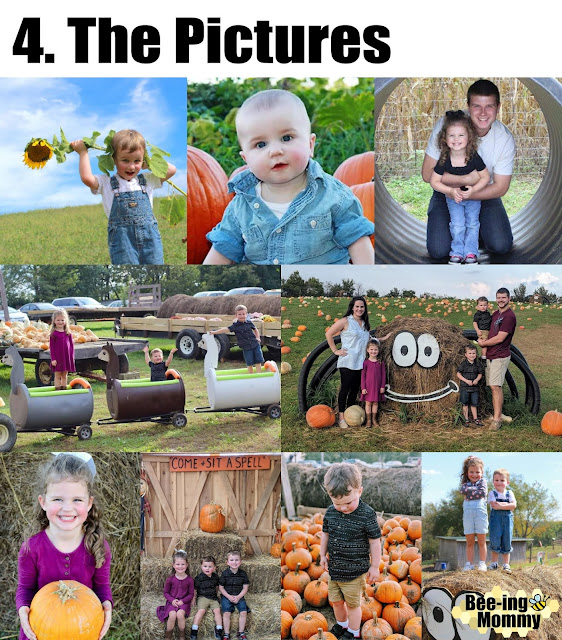 pumpkins, pumpkin patch, fall, fall bucket list, things to do in fall, pumpkin patch vs supermarket, pumpkin patch vs grocer store, family fun, family activity, fall family activity,  life experience, fall fun, fall decor, 5 reasons why, pumpkin pictures, different pumpkins, pumpkin hunting, pumpkin patch photography, pumpkin photography