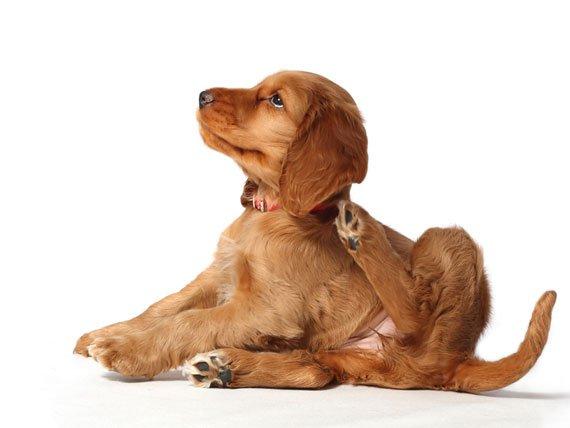 Pets throughout epizoan and Tick Season