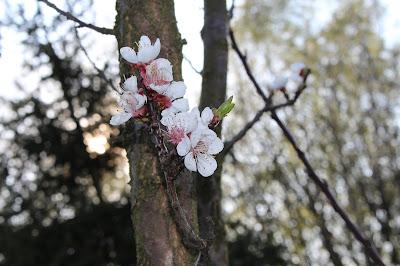 Wiosenna sesja zdjęciowa