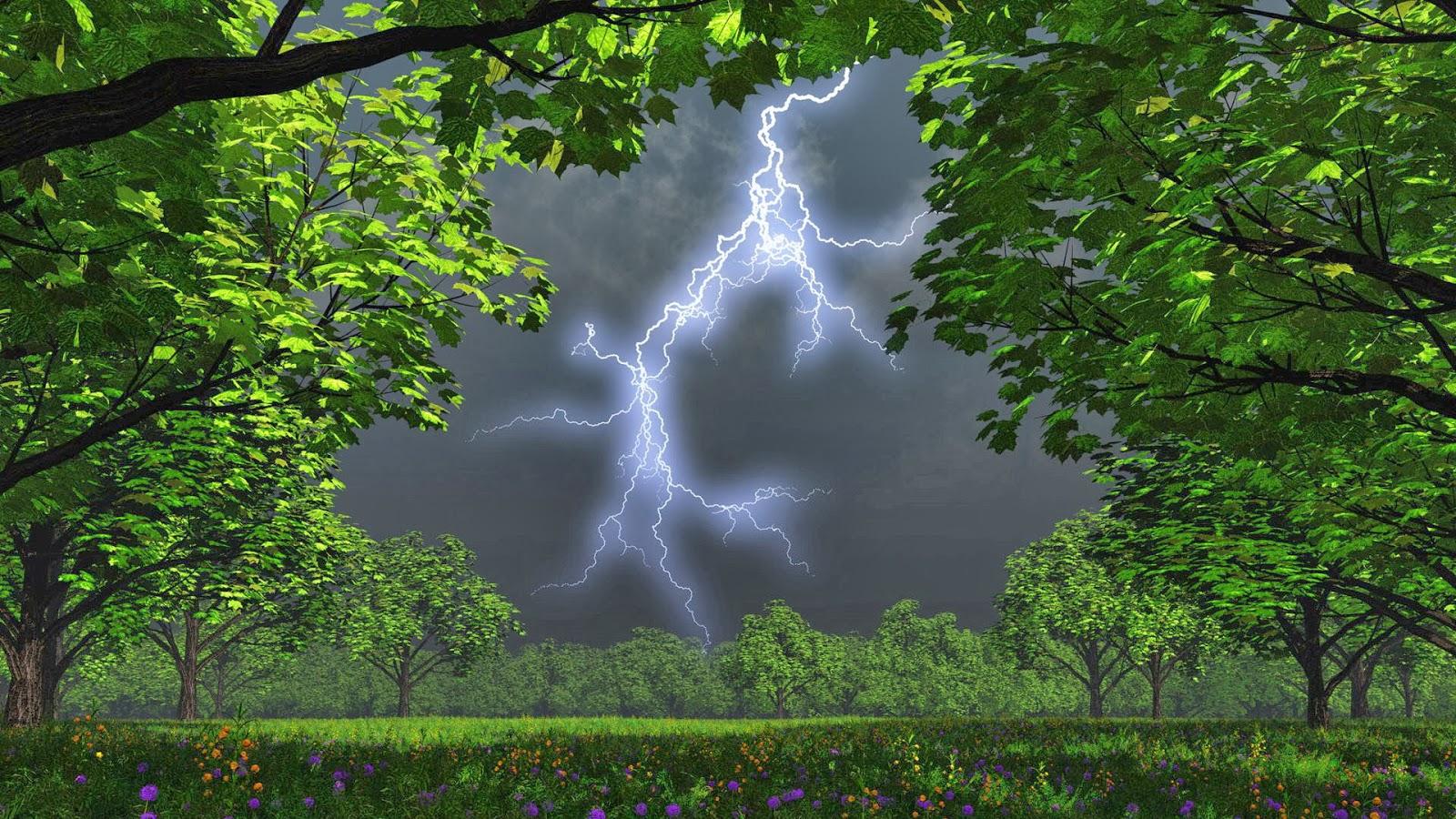 All 4u hd wallpaper free download natural wallpapers - Rainy nature hd wallpaper ...