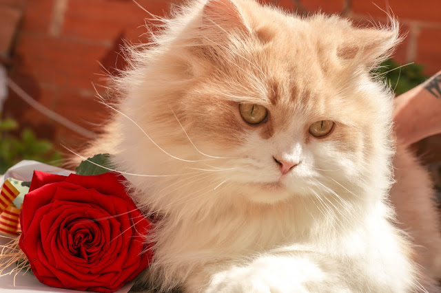 pets%2Bas - Here's How to Make Your Old Cat Feel Young Again