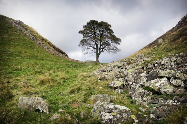 Sycamore Gap on Hadrian's Wall walk, best view