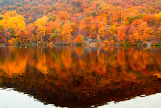 Photo of beautiful autumn trees reflected in water