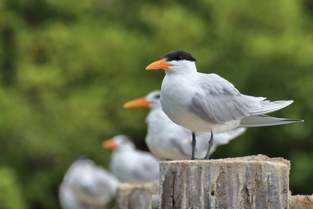 Boca Drago, Playa Estrellas e Isla Pájaros en Bocas del Toro