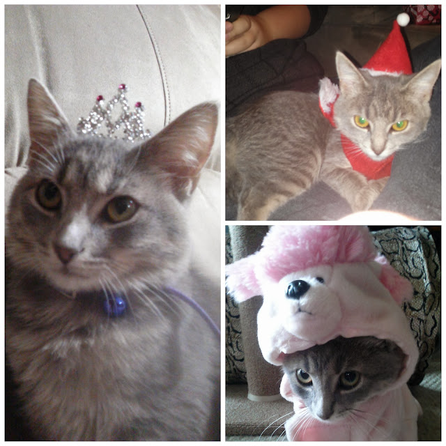 #kitten in #tiara, #santa hat and #bunny costume-CarmaPoodale.com
