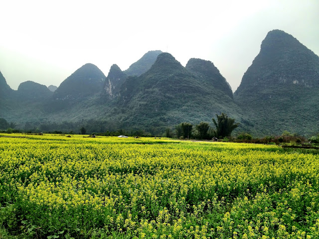 Yangshuo field, China