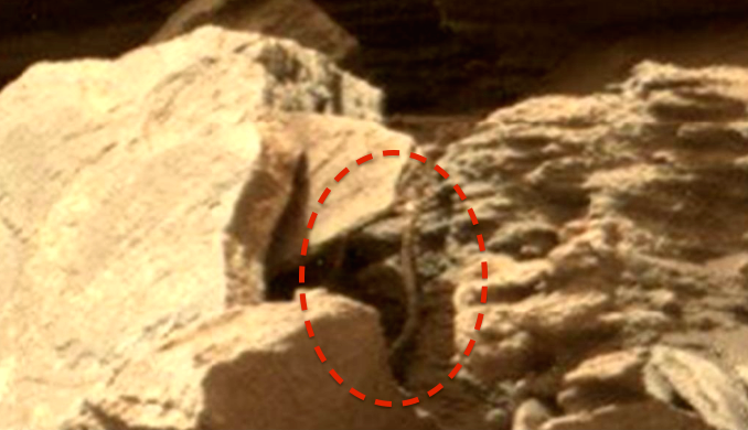 UFO SIGHTINGS DAILY: Snake Found On Mars In NASA Rover ...