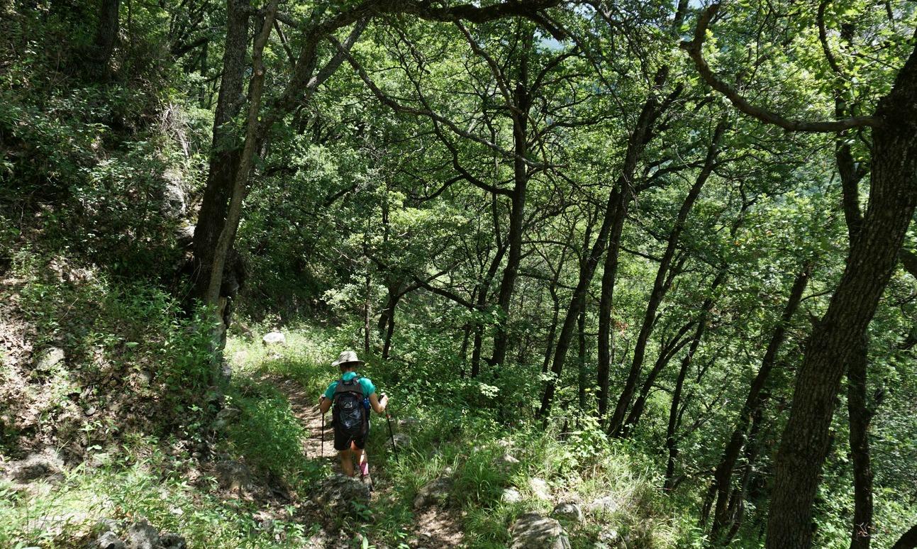GR4 trail under Gréolières