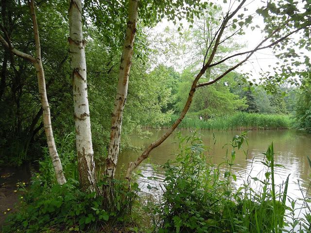 woodland garden, leśny ogród