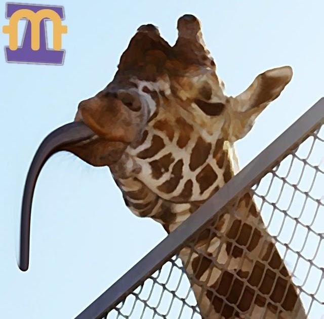 Imagens MeXidas: Língua De Girafa