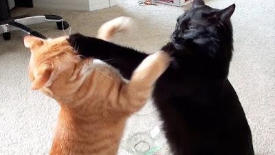 http://www.liataja.com/2016/06/yuk-liataja-foto-kucing-berantam-lucu.html