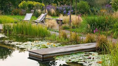 Foto del día: piscina naturalizada en Ellicar Garden
