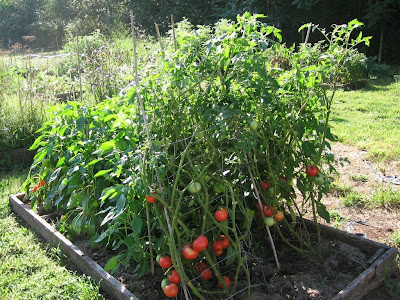 tomato make me hungry. Black Bedroom Furniture Sets. Home Design Ideas