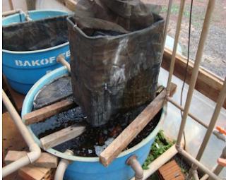 Cria o de peixes em tanques piscicultura online como for Manual de piscicultura tilapia